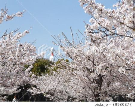 薄桃色の綺麗な花が咲いたソメイヨシノの先にボーリング場の広告 39930877