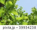 新緑 葉 植物の写真 39934238