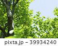 新緑 葉 植物の写真 39934240