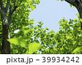 新緑 葉 植物の写真 39934242