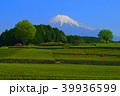 富士市大淵笹場の茶畑と富士山 2018/04/20 39936599
