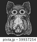 イノシシ 猪 ドローイングのイラスト 39937254