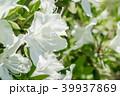 躑躅 つつじ 花の写真 39937869