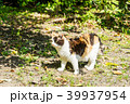 野良猫 39937954