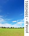 青空 夏 公園の写真 39945601
