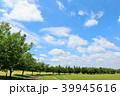 青空 夏 公園の写真 39945616