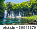 《静岡県》白糸の滝・清流 39945879