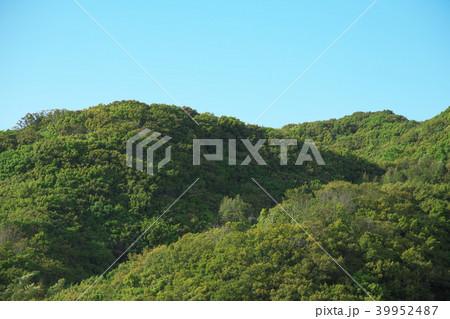 山(愛知県知多郡美浜町) 39952487