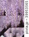 藤 花 植物の写真 39953565