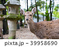 鹿 奈良公園 春日大社の写真 39958690
