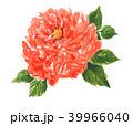 rose18423pix7 39966040