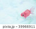 金魚 39966911