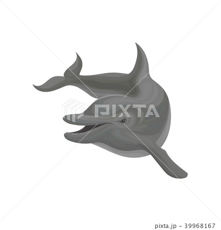 Dolphin marine mammal, inhabitant of sea and ocean vector Illustration on a white background 39968167