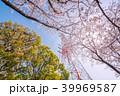 ソメイヨシノ 鉄塔 春の写真 39969587