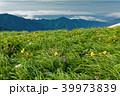 飯豊連峰 高山植物 御西岳の写真 39973839