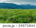 飯豊連峰 高山植物 御西岳の写真 39973844