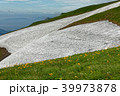 ニッコウキスゲ咲く飯豊連峰縦走路と残雪 39973878