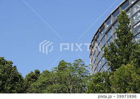おきなわ風景 森の中にあるガラス張りの建物の写真素材