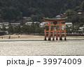 厳島神社 鳥居 宮島の写真 39974009