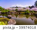 富士山 桜 大石寺の写真 39974018