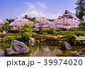 富士山 桜 大石寺の写真 39974020