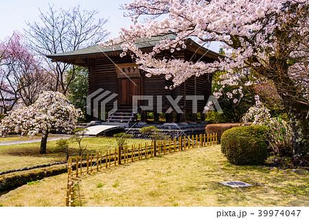 桜満開 大石寺の庭園 39974047