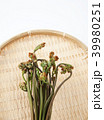 わらび 蕨 植物の写真 39980251
