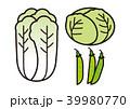 白菜 キャベツ さやえんどうのイラスト 39980770