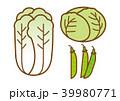 白菜 キャベツ さやえんどうのイラスト 39980771