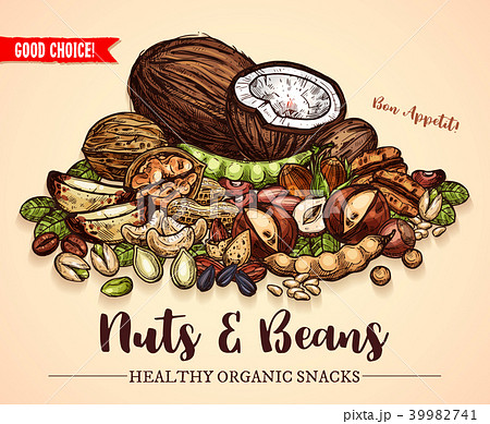 Vector sketch poster of nuts and fruit beans seeds 39982741