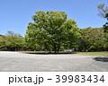 公園 広場 新緑の写真 39983434