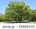 公園 新緑 茅ケ崎市の写真 39983435