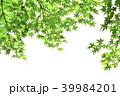 新緑 春 葉の写真 39984201