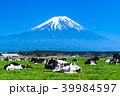 富士山 牧場 放牧の写真 39984597