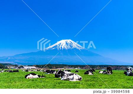 《静岡県》富士山・朝霧高原の牧場 39984598