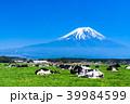 富士山 牧場 放牧の写真 39984599