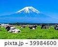 富士山 牧場 放牧の写真 39984600