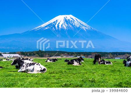 《静岡県》富士山・朝霧高原の牧場 39984600
