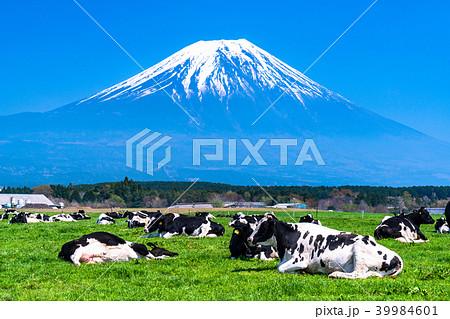 《静岡県》富士山・朝霧高原の牧場 39984601