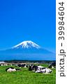 《静岡県》富士山・朝霧高原の牧場 39984604