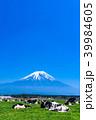 富士山 牧場 放牧の写真 39984605