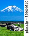 富士山 牧場 放牧の写真 39984610