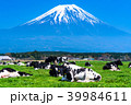 《静岡県》富士山・朝霧高原の牧場 39984611