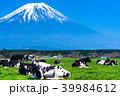 富士山 牧場 放牧の写真 39984612
