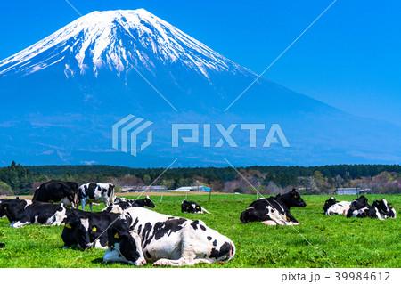 《静岡県》富士山・朝霧高原の牧場 39984612