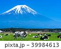富士山 牧場 放牧の写真 39984613