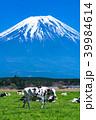 富士山 牧場 放牧の写真 39984614