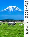 富士山 牧場 放牧の写真 39984615