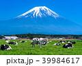 富士山 牧場 放牧の写真 39984617
