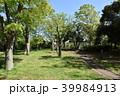 公園 新緑 春の写真 39984913